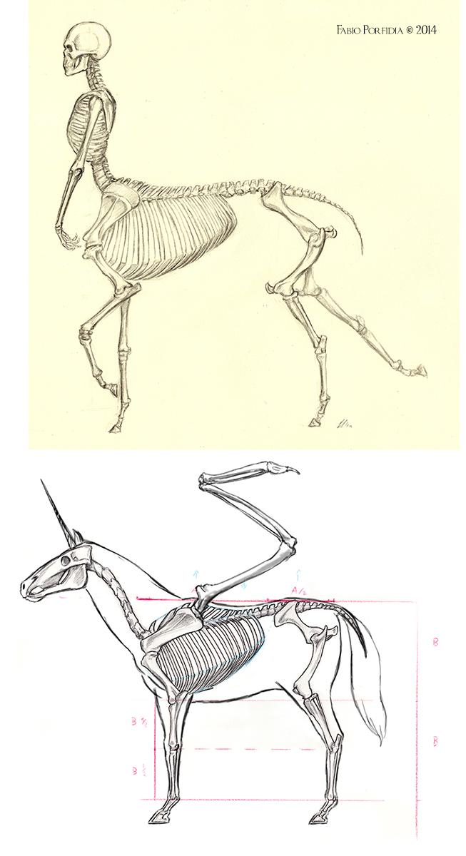 Unicorn Centaur Pegasus Anathomy